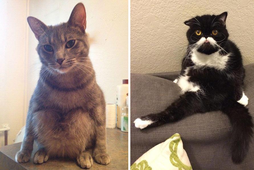 20 dáng ngồi phong thái hoàng thượng của các boss mèo - Ảnh 25.
