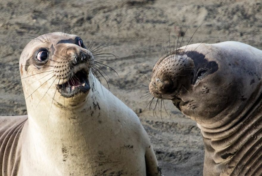 19 con vật tội nghiệp bị chụp ảnh dìm hàng đúng lúc đang không ăn hình - Ảnh 25.