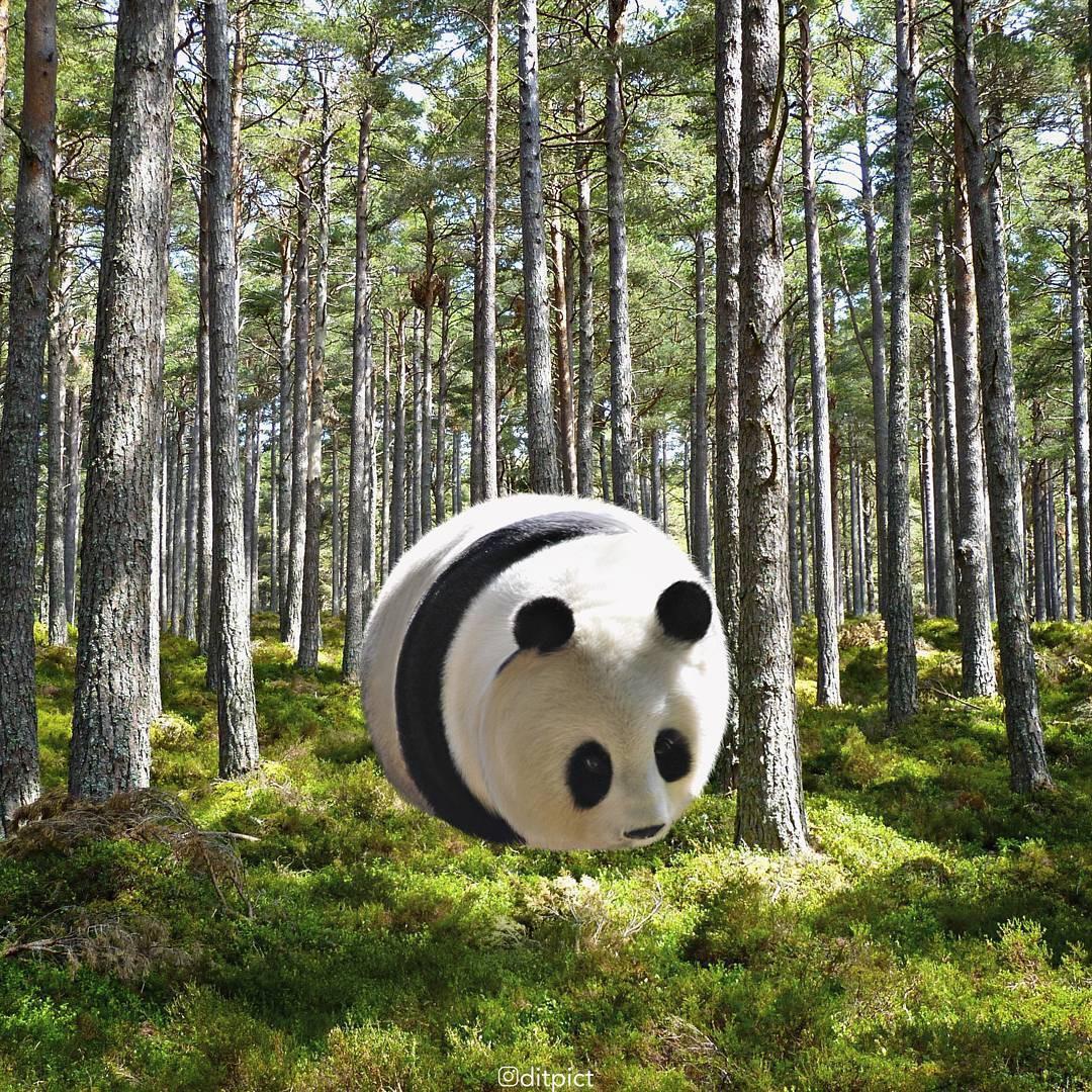Bộ ảnh Photoshop các loài động vật trở nên tròn vo như bóng bay - Ảnh 1.
