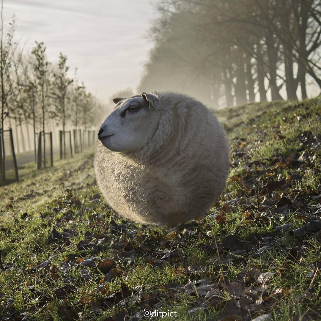 Bộ ảnh Photoshop các loài động vật trở nên tròn vo như bóng bay - Ảnh 3.