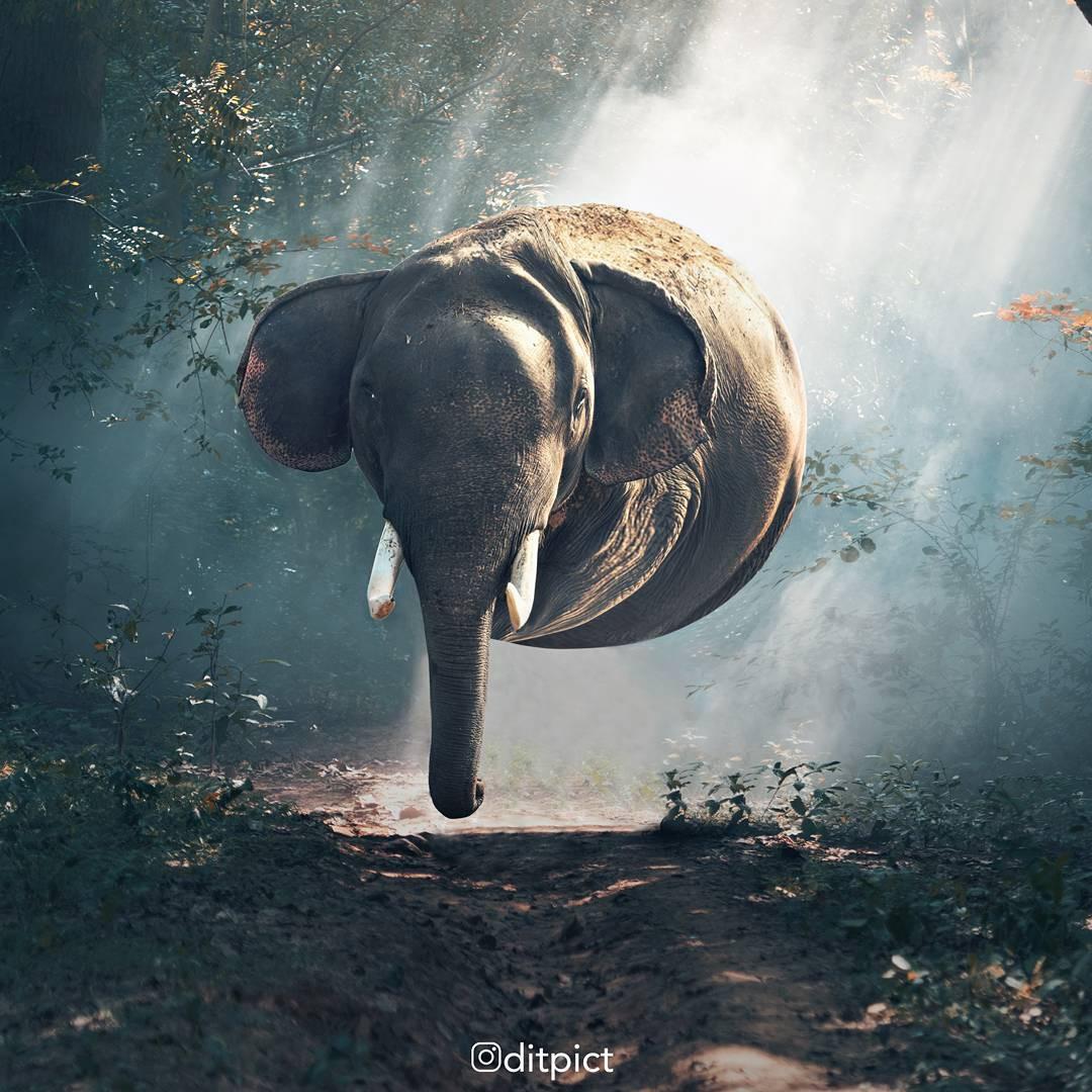 Bộ ảnh Photoshop các loài động vật trở nên tròn vo như bóng bay - Ảnh 5.