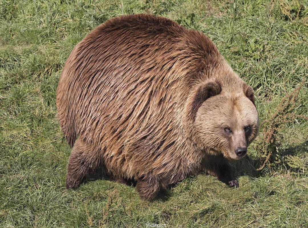 Bộ ảnh Photoshop các loài động vật trở nên tròn vo như bóng bay - Ảnh 9.