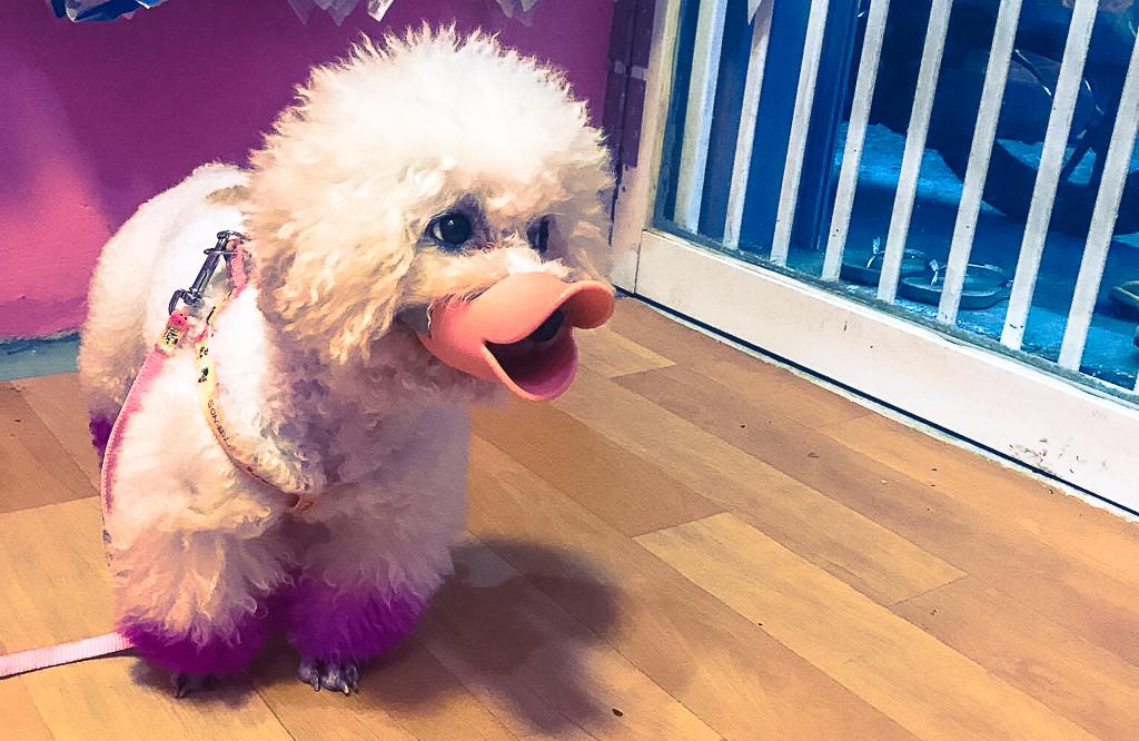 Clip người Sài Gòn nói về việc tiêu hủy chó thả rông nếu chủ nhân không đến nhận sau 72 giờ: Ủng hộ quy định nhưng cần hành động nhân văn - Ảnh 5.