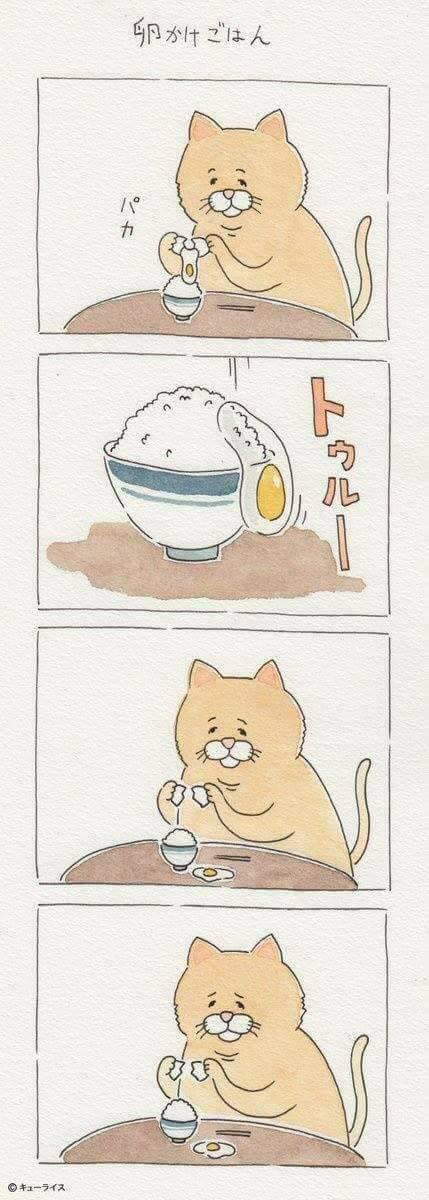 Khi mèo ăn uống như con người và cũng gặp tai nạn dở khóc dở cười chẳng kém ai! - Ảnh 5.