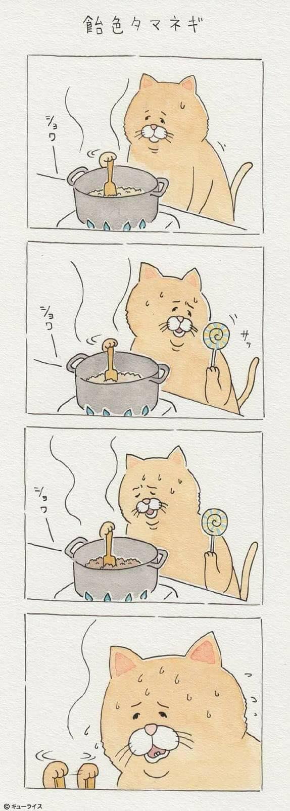 Khi mèo ăn uống như con người và cũng gặp tai nạn dở khóc dở cười chẳng kém ai! - Ảnh 11.