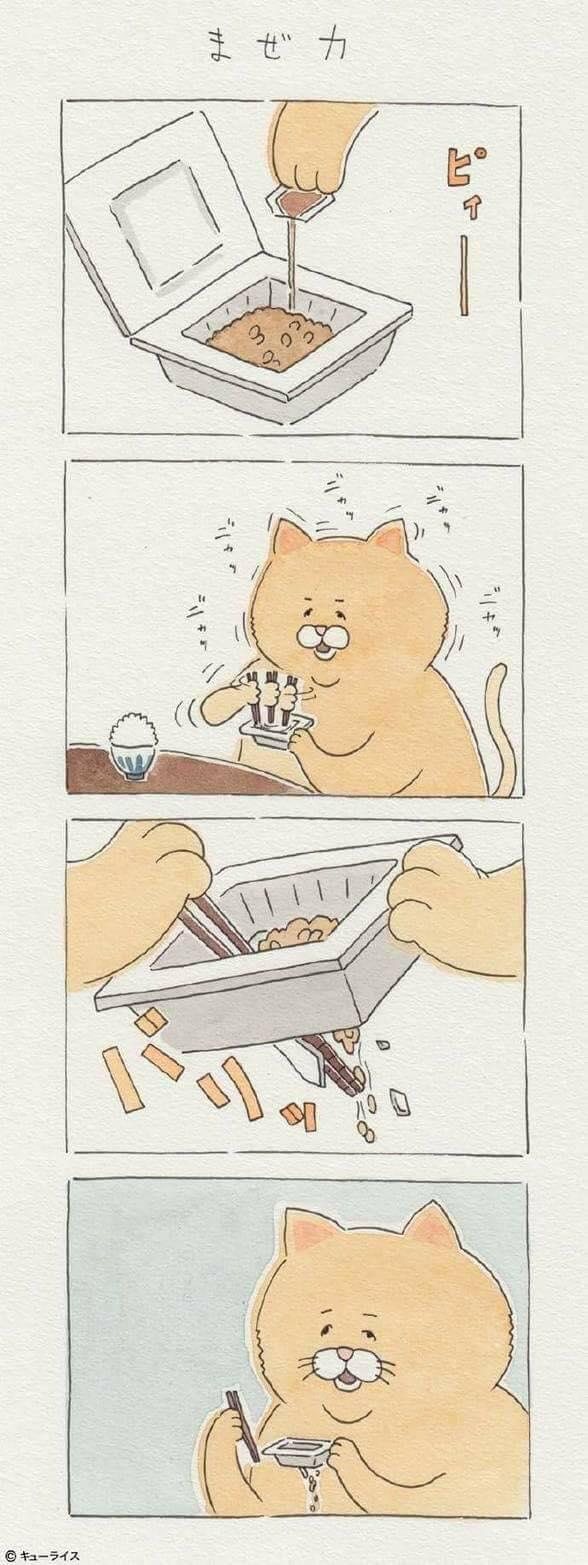 Khi mèo ăn uống như con người và cũng gặp tai nạn dở khóc dở cười chẳng kém ai! - Ảnh 13.