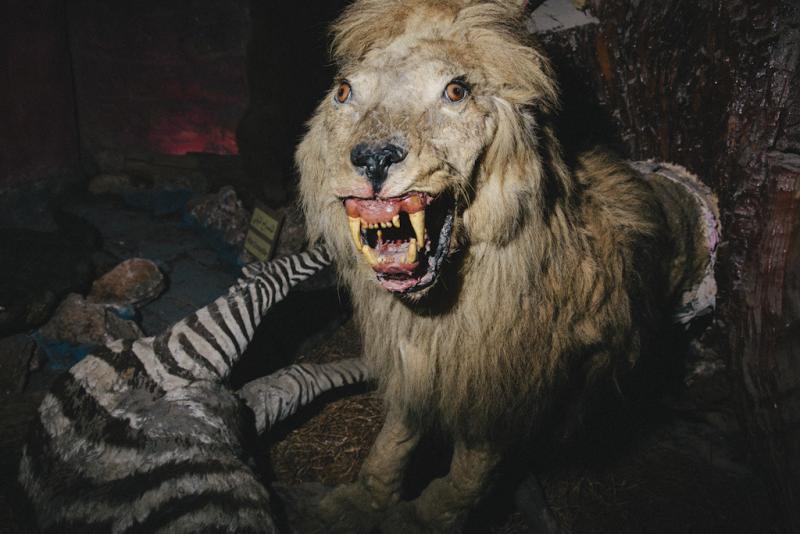 Những xác thú nhồi bông mặt ngáo khiến bạn nhìn phát là cười như ma làm - Ảnh 25.