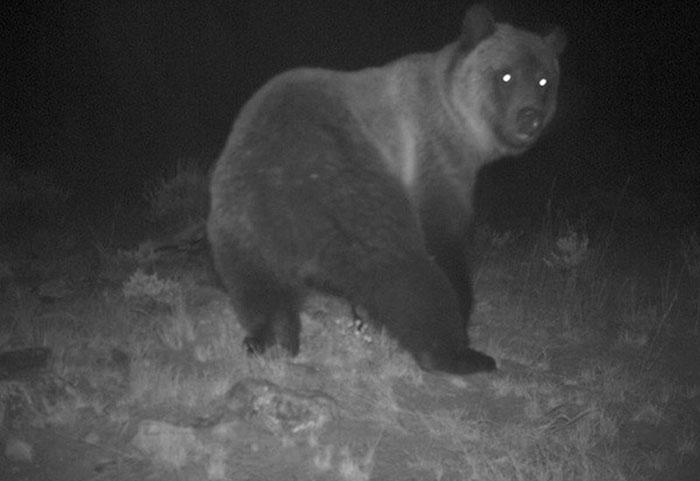 Đặt máy quay lén động vật, thợ săn bất ngờ khi thấy những hành vi kỳ lạ của chúng - Ảnh 29.