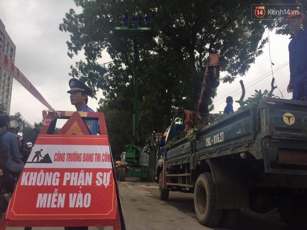 Hà Nội chặt, di dời hơn 1.000 cây ở đường Phạm Văn Đồng - Ảnh 5.
