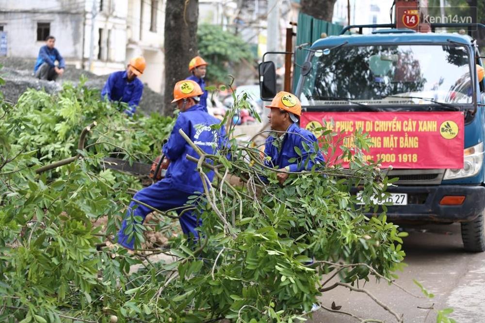 Hà Nội chặt, di dời hơn 1.000 cây ở đường Phạm Văn Đồng - Ảnh 2.