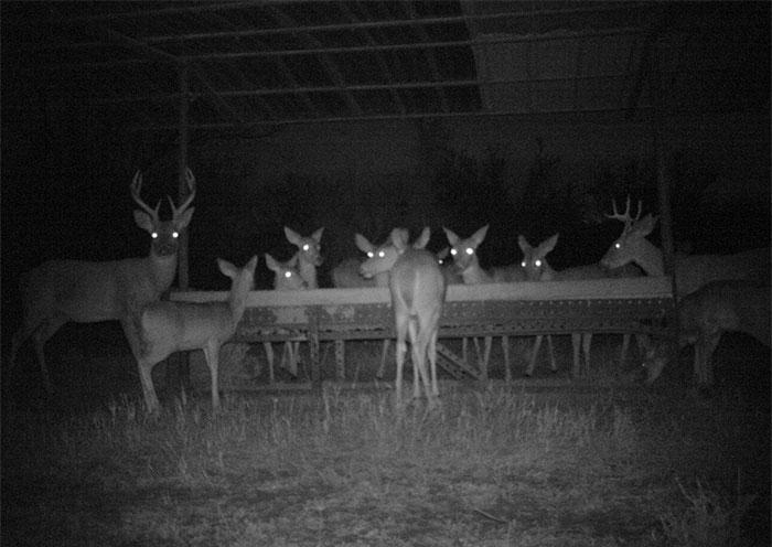 Đặt máy quay lén động vật, thợ săn bất ngờ khi thấy những hành vi kỳ lạ của chúng - Ảnh 31.