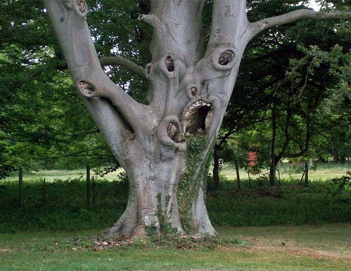 16 gương mặt ma quái tình cờ mọc trên những thân cây vô tri, vô giác - Ảnh 29.