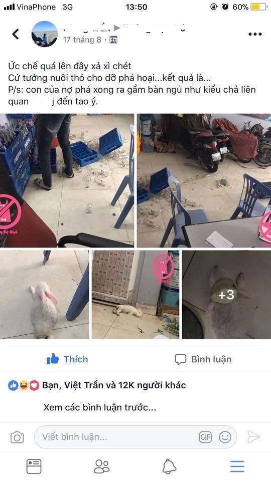 Chân dung con chó đội lốt thỏ ăn hại nhất toàn quốc đang bị rao bán trên MXH - Ảnh 1.