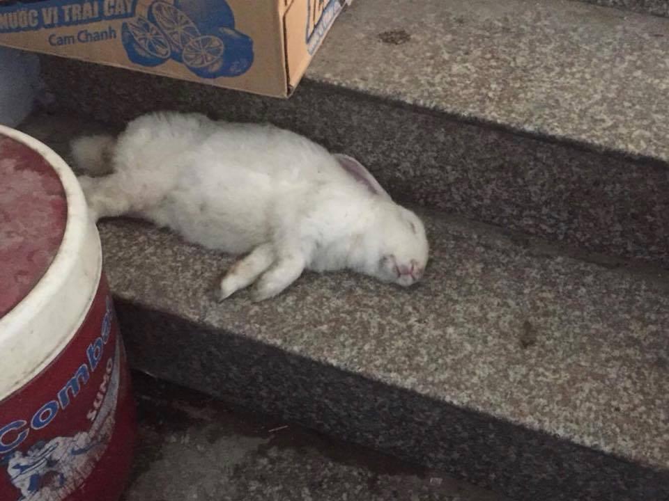 Chân dung con chó đội lốt thỏ ăn hại nhất toàn quốc đang bị rao bán trên MXH - Ảnh 6.