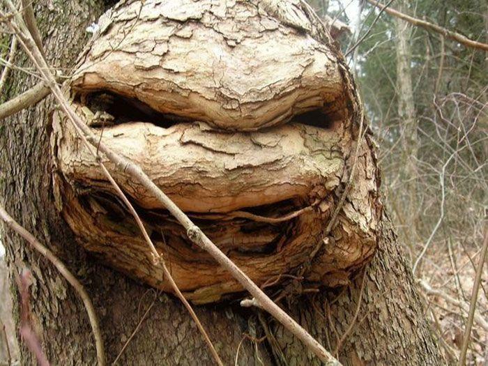 16 gương mặt ma quái tình cờ mọc trên những thân cây vô tri, vô giác - Ảnh 31.