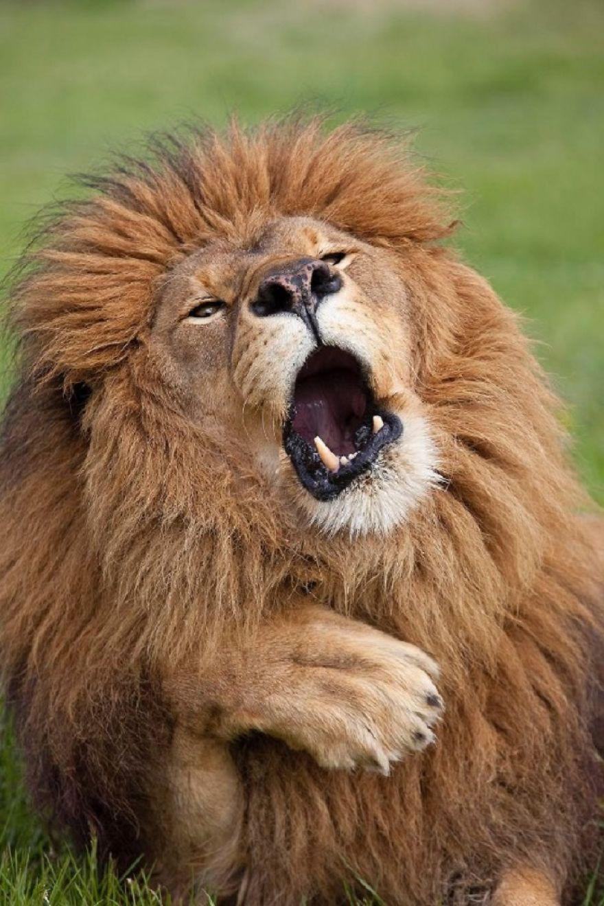 19 con vật tội nghiệp bị chụp ảnh dìm hàng đúng lúc đang không ăn hình - Ảnh 27.