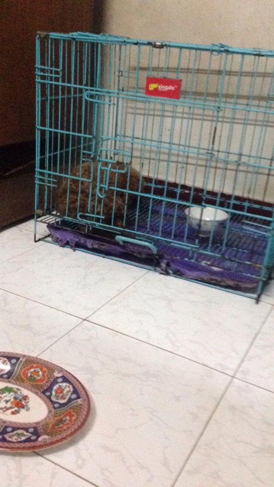 Chủ quên không tắt máy sưởi, đàn chó Poodle 8 con bị chết cháy - Ảnh 4.
