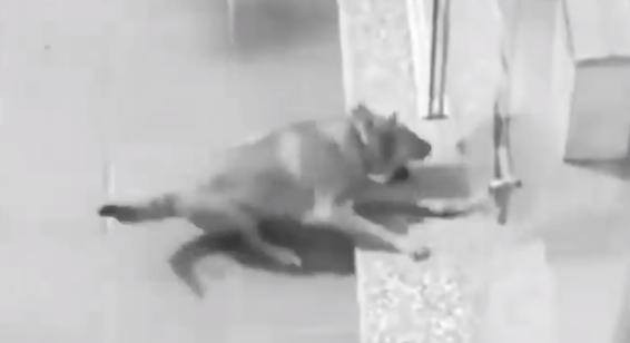 Clip: Boss suýt biến thành chó pug mặt bẹt vì sen lắp cửa kính mà không báo cáo - Ảnh 2.
