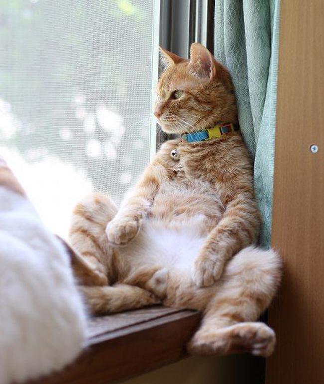 20 dáng ngồi phong thái hoàng thượng của các boss mèo - Ảnh 39.