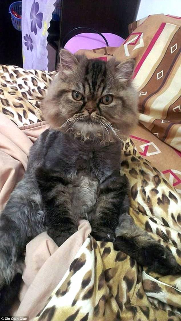 Không thể nhịn cười khi nhìn chú mèo đang cạo lông dở thì nhà mất điện - Ảnh 4.