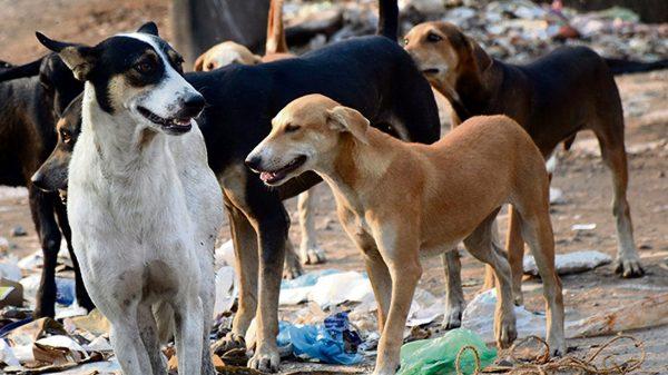 Xử lý chó hoang trên thế giới: Nơi đánh đập, đầu độc, chỗ đưa chó hoang về trung tâm bảo trợ để chờ nhận nuôi - Ảnh 6.