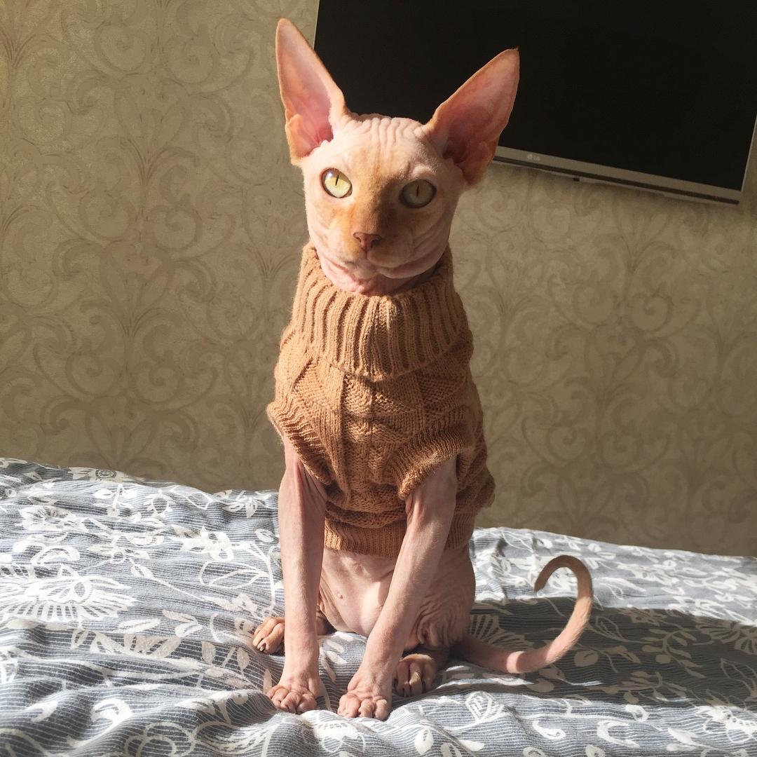 Tiêm thuốc mê cho mèo bất tỉnh rồi đè ra xăm hình, cô gái bị dư luận ném đá - Ảnh 4.