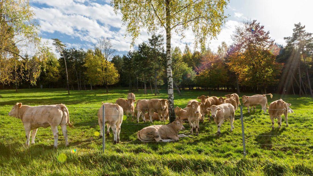 Món thịt bò ngủ đông đắt nhất thế giới, muốn ăn phải đặt trước cả năm trời - Ảnh 2.