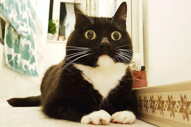 Chết cười với boss chẳng ăn cỏ mèo mà lúc nào mặt cũng đơ như cây cơ - Ảnh 3.