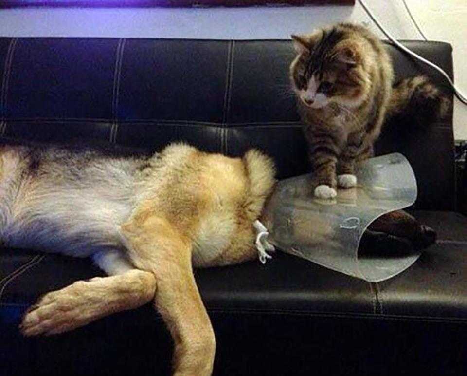 Khuôn mặt đáng thương của 14 chú chó bị những con mèo đanh đá bắt nạt - Ảnh 5.