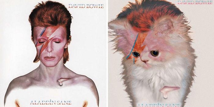 Thay đám mèo cute vào hình ca sĩ trên bìa album, cuối cùng hiệu ứng từ chúng còn hiệu quả hơn bản gốc - Ảnh 23.