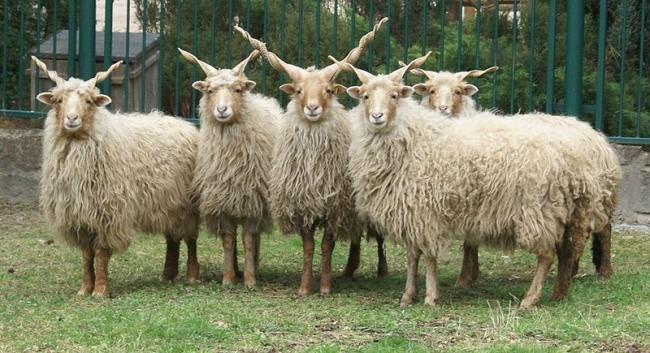 Chiêm ngưỡng 17 loài vật sở hữu bộ lông đặc biệt nhất trần đời - Ảnh 5.