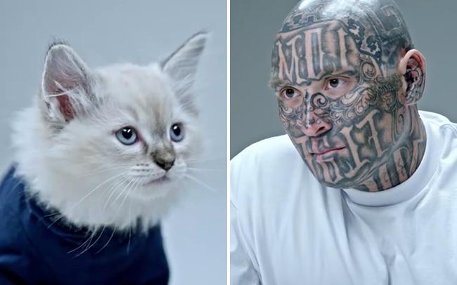 Xã hội đen thi lườm nhau không chớp mắt với mèo, cuối cùng, mèo thắng tuyệt đối - Ảnh 5.