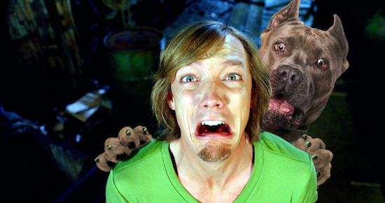 Loạt ảnh chế chú chó sợ hãi khiến bạn xem xong cũng phải buồn cười - Ảnh 3.