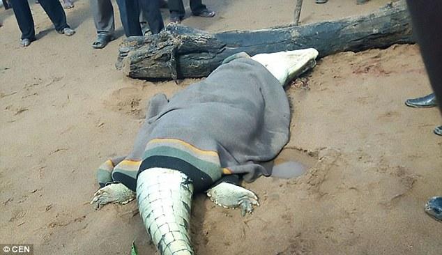 Người dân phẫn nộ giết chết quái vật cá sấu khổng lồ ăn thịt bé trai 8 tuổi - Ảnh 2.