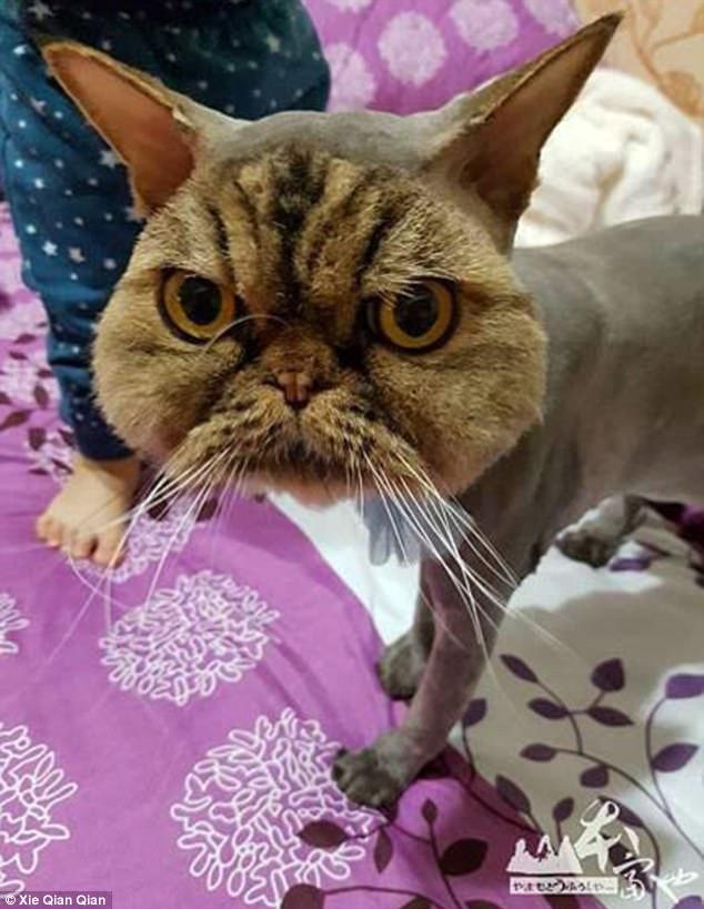 Không thể nhịn cười khi nhìn chú mèo đang cạo lông dở thì nhà mất điện - Ảnh 2.