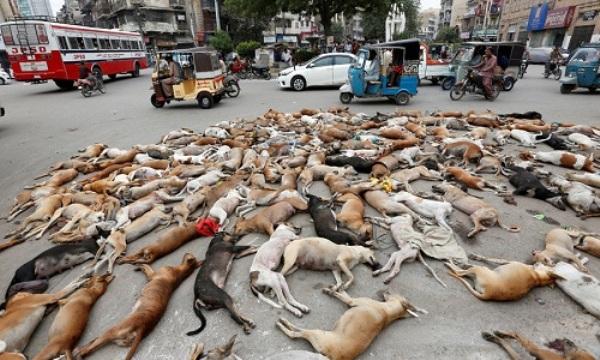 Xử lý chó hoang trên thế giới: Nơi đánh đập, đầu độc, chỗ đưa chó hoang về trung tâm bảo trợ để chờ nhận nuôi - Ảnh 8.