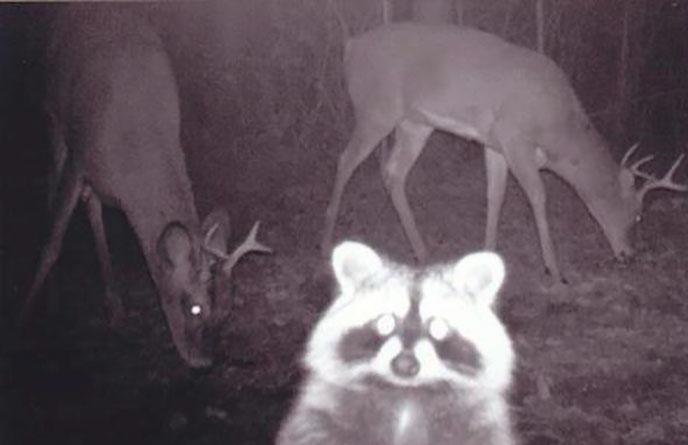 Đặt máy quay lén động vật, thợ săn bất ngờ khi thấy những hành vi kỳ lạ của chúng - Ảnh 3.