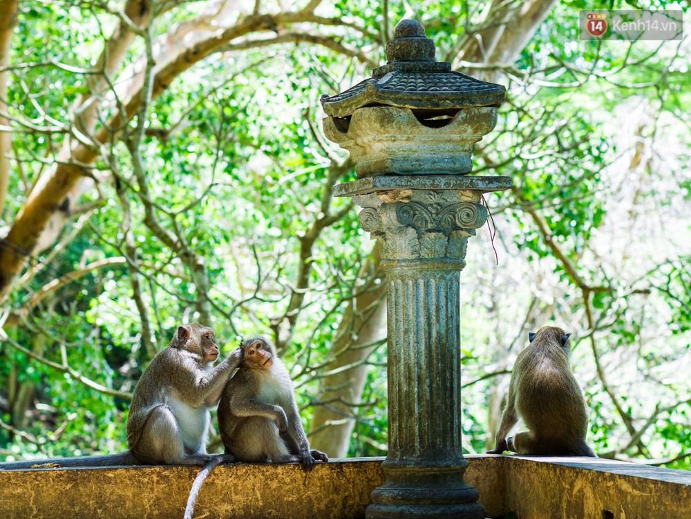 Chùm ảnh: Chuyện về đàn khỉ đuôi dài nương náu trong ngôi chùa ở Vũng Tàu, sống nhờ thức ăn của du khách - Ảnh 4.
