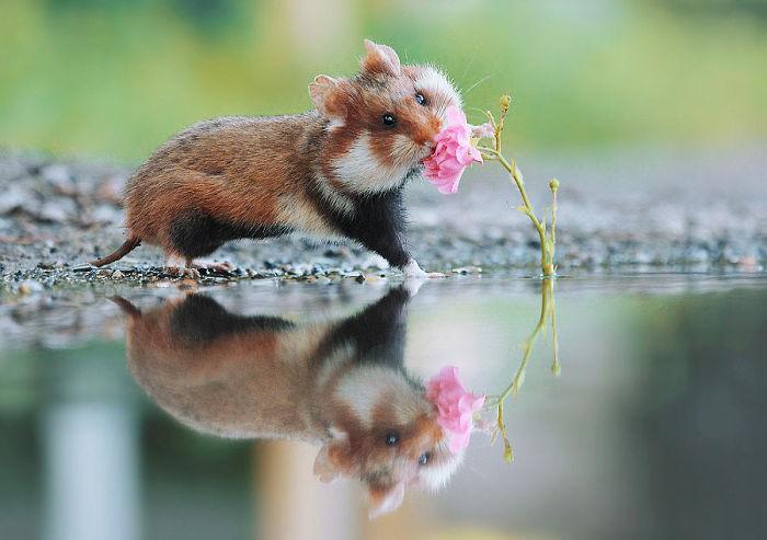 Cuộc sống hưởng thụ của 15 chú chuột hamster sống ở ngoài thế giới tự nhiên - Ảnh 19.