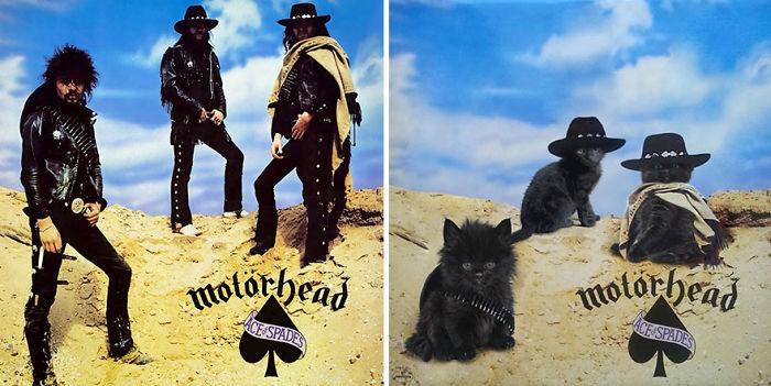 Thay đám mèo cute vào hình ca sĩ trên bìa album, cuối cùng hiệu ứng từ chúng còn hiệu quả hơn bản gốc - Ảnh 25.