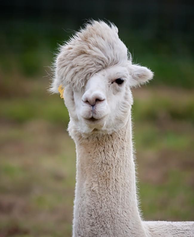 Chiêm ngưỡng 17 loài vật sở hữu bộ lông đặc biệt nhất trần đời - Ảnh 7.