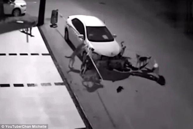 Quyết tâm truy sát mèo, đàn chó hoang phá nát chiếc ô tô ven đường - Ảnh 3.