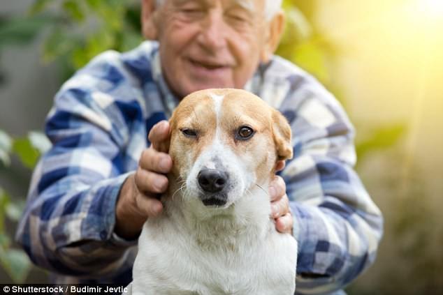Nghiên cứu quy mô 3 triệu người đã xác nhận một lợi ích tuyệt vời khi nuôi một con chó - Ảnh 1.