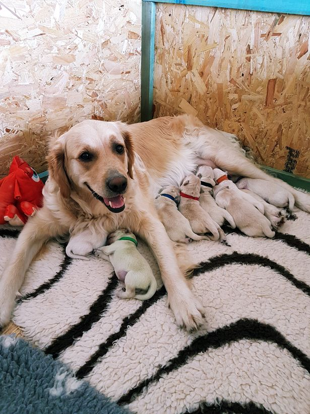 Trên thế giới mới chỉ phát hiện thấy 3 chú chó có màu lông xanh chóe lọe như thế này - Ảnh 3.