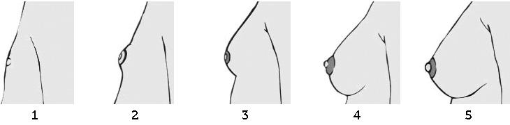 9 bước dậy thì quan trọng mà bất kỳ cô gái nào cũng phải trải qua - Ảnh 2.