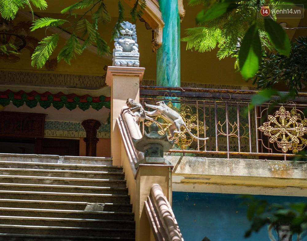 Chùm ảnh: Chuyện về đàn khỉ đuôi dài nương náu trong ngôi chùa ở Vũng Tàu, sống nhờ thức ăn của du khách - Ảnh 5.