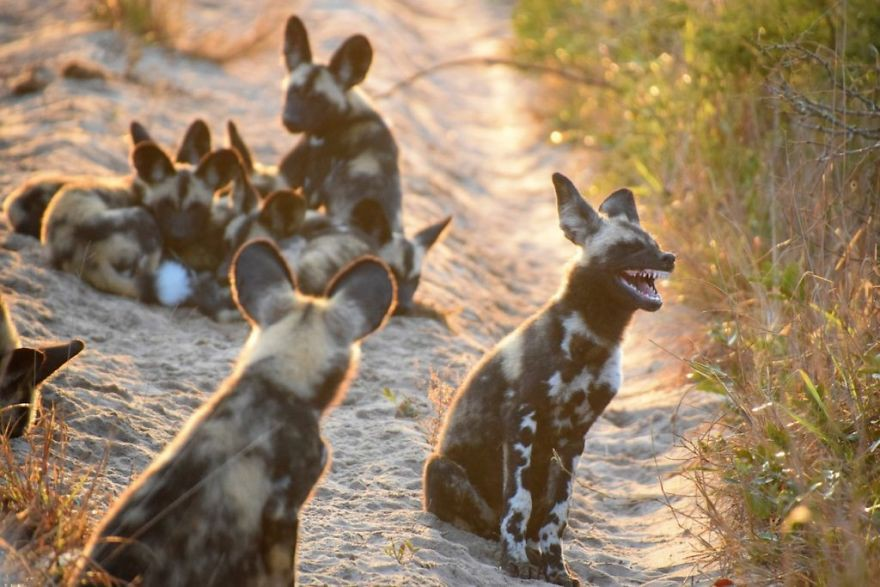 19 con vật tội nghiệp bị chụp ảnh dìm hàng đúng lúc đang không ăn hình - Ảnh 5.
