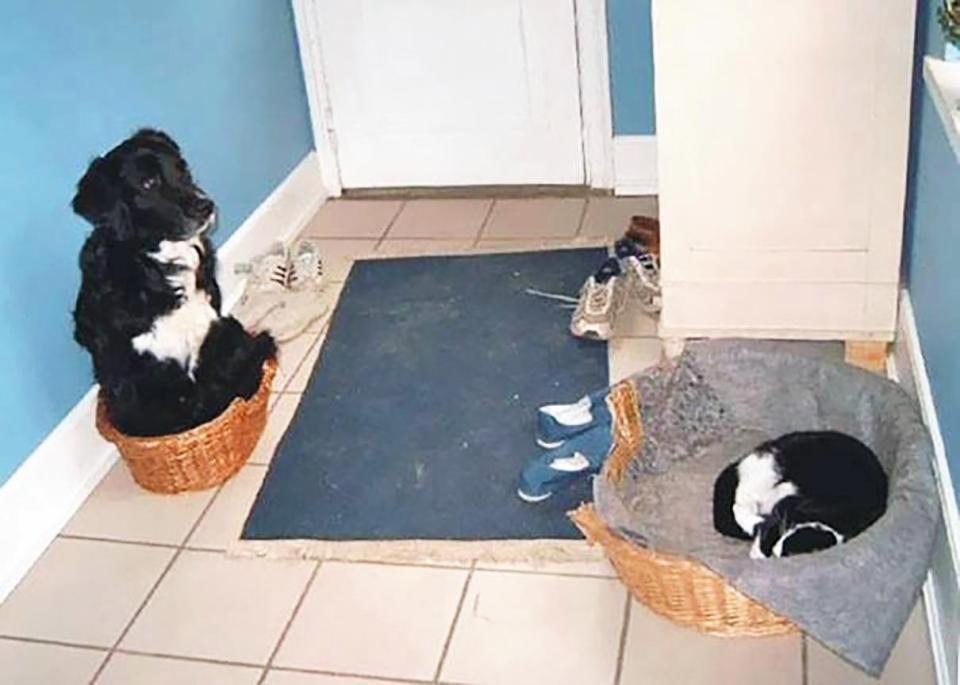 Khuôn mặt đáng thương của 14 chú chó bị những con mèo đanh đá bắt nạt - Ảnh 9.