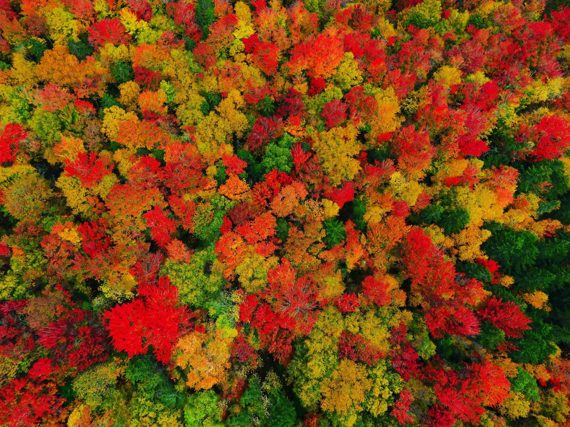 Ngắm phong cảnh đẹp đến ngoạn mục của những khu rừng vào mùa thu - Ảnh 7.
