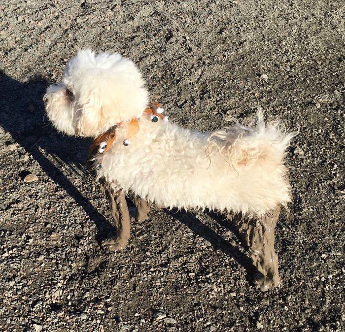 16 chú chó không dùng bột giặt nhưng cũng chẳng ngại gì vết bẩn - Ảnh 23.
